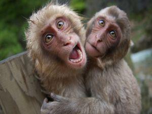 Humorous monkeys