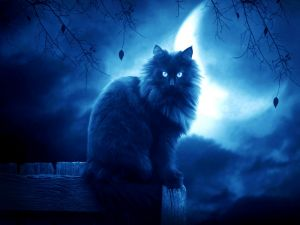 Cat with the moon