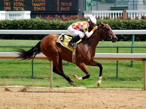 Thoroughbred running a race at Churchill Downs