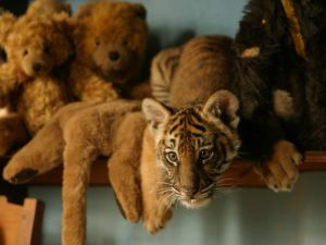 Among teddies