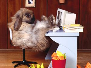 Bunny on his desk