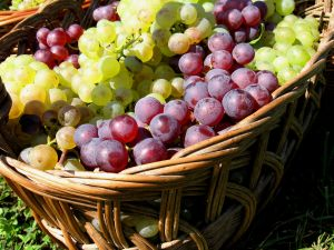 Basket with white and red grapes