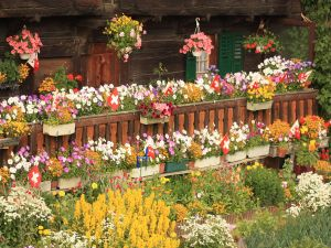 Flowery chalet