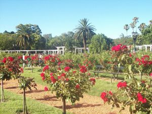 Rose Garden Palermo, Buenos Aires (February 3 Park)