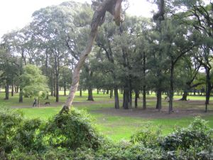 Forests of Palermo neighborhood, in Buenos Aires