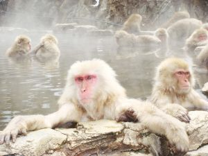 Soaked monkeys