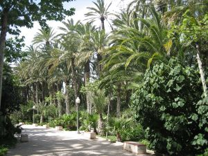 Set of palm trees in the City Park of Elche (Spain)