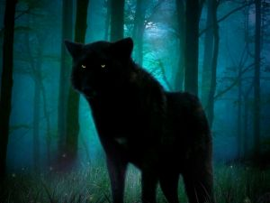 Black wolf in the shadows