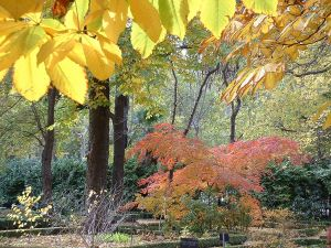 Autumn in the Botanical Garden (Madrid, Spain)