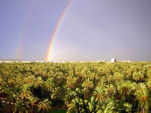 Rainbow over the Palm Grove of Elche (Spain)