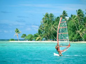 Windsurfing with palm trees to the background