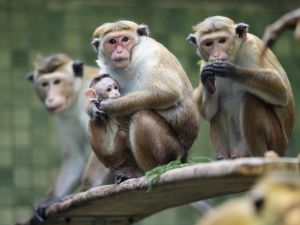Monkeys in family