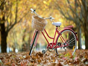 Bicycle over the fallen leaves of autumn
