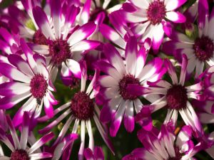 Beautiful white and purple flowers