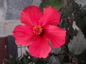 A beautiful red flower