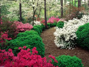Flowered path
