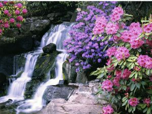 Waterfall surrounded by azaleas