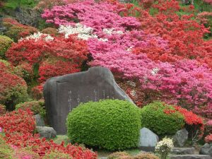 Azaleas of various colors in a park in Japan