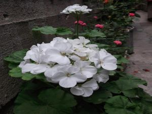 Beautiful white flowers
