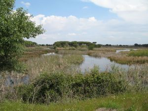 Doñana National Park (Huelva, Spain)