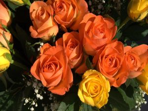 Orange and yellow roses