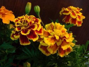 Flowers with orange and yellow tones