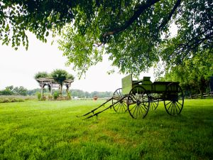 Cart on the grass