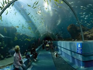 """The tunnel of exhibition """"Ocean Voyager"""" (United States)"""