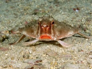 Marine creature
