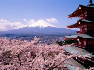 Cherry blossoms with views to Mount Fuji