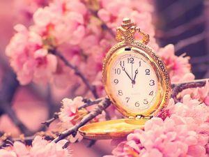 Pocket watch among cherry blossoms