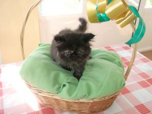 Wicker basket with black kitten