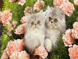 Two cats among roses