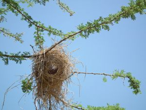 Nest of a bird