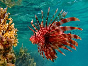 Beautiful red-striped fish