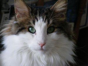 Feline gaze