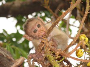 Little monkey on top of a tree