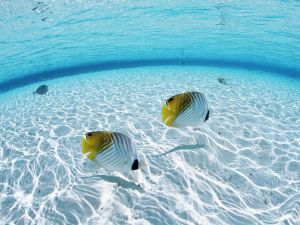 Tropical fish in clear water