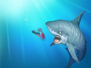 Shark attacking a betta fish