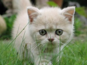 Small cat walking on the grass