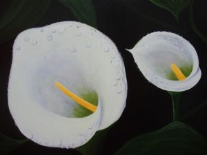 Painting of two callas with drops of dew