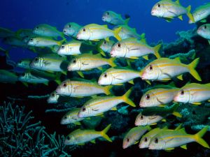 Shoal of small fishes