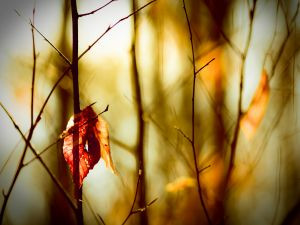 A lonely leaf between the branches