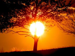 The circle of the sun behind a tree