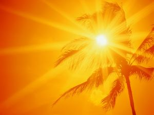 The sun behind a palm tree