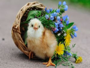 Chick in a nest with flowers