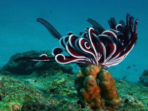 In the ocean floor
