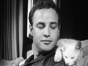 Marlon Brando with a white kitten