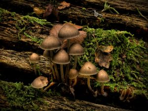 Mushrooms, moss and wood