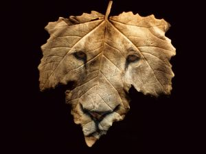 Leaf with the face of a lion